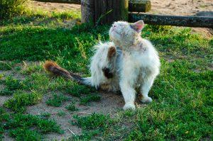 Когда надо мыть кота?