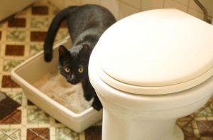 Кошачий лоток в туалете