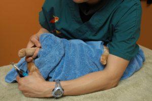 Кошка завернута в полотенце