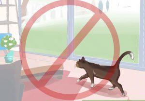 Запрет кошке на кровать