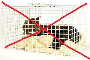 Кошка в клетке зачеркнуто