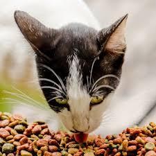 Кот есть сухой корм