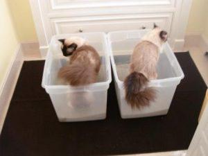 Два кота в лотках