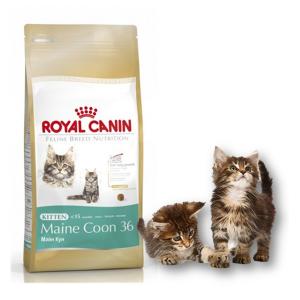 Мухой корм для котенка мейн куна