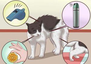 Отучаем кота метить территорию народными средствами