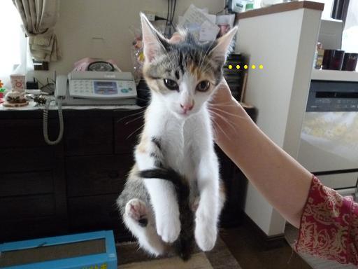 Отучить чужих котов метить