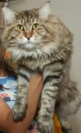 Farmina Vet Life Gastro-Intestinal корм для кошек при