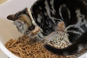Древесный наполнитель для котят