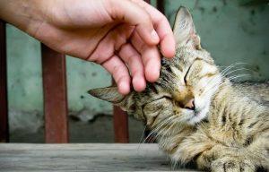 Наладить отношения с котом - иногда лучший способ избежать меток