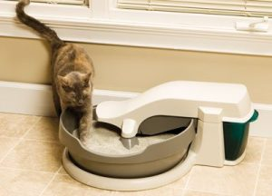 Cleaning Litter Box