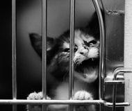 несчастный котенок, выращенный в клетке