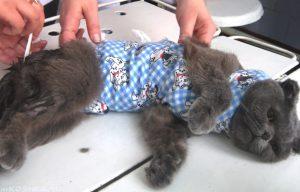 кошка после оперции
