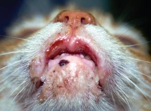 Роял канин: гипоаллергенный корм для кошек