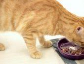 Миниатюра к статье Вся правда о кормах для кошек холистик-класса