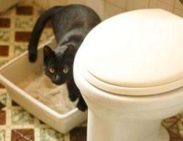 Миниатюра к статье Приучаем взрослого кота к лотку на новом месте: проверенные способы