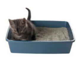 Миниатюра к статье Наполнители для кошачьих туалетов: древесный, комкующийся, силикагелевый: что выбрать?