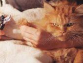 Миниатюра к статье Маникюр по-кошачьи: стрижем коготки кошке