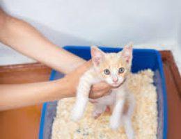 Миниатюра к статье Приучаем котенка к лотку: быстро и надежно