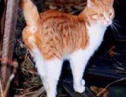 Миниатюра к статье Как отучить кота метить территорию в квартире